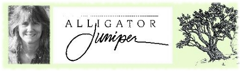 feature pic Alligator Juniper